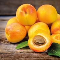 frische-aprikosen